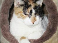 Piper is a typical Calico.  Independent, lovable,