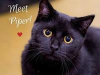 Piper's story Piper loves to play, cuddle, & follow her