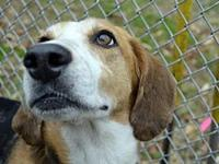 Piper's story Piper's story: Piper is a sweet girl with