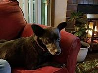 Piper's story Thanks for visiting me! I am Piper, and I