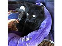 Piper's story Our pets are spayed/neutered and current