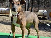 Pippa's story Pippa originally came to us from an