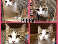 PIPPA's story PIPPA - F, DSH, Tabby, approximately 8