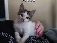 My story You can fill out an adoption application