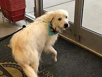 Pippen's story For Adoption: Pippin is 6 years old and