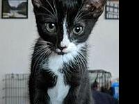 Pippen Male Kitten's story My name is Pippen, and Im a