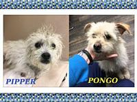Pipper and Pongo - OK's story Pipper and Pongo were