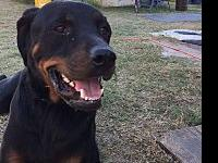 PIRATE's story Soul Dog Rescue has a super guy ready