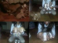 Have full blooded red nose cute young puppies and have