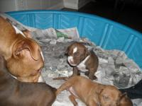 Descripción Fully registered with papers! 2 litters