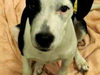 Pit Bull Terrier - Bessie - Medium - Young - Female -