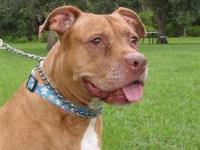 Pit Bull Terrier - Jasmine - Special Needs - Large -