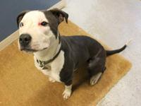 Pit Bull Terrier - Lucy - Medium - Adult - Female -