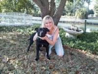 Pit Bull Terrier - Martin - Medium - Adult - Male -