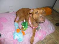 Pit Bull Terrier - Penny - Medium - Young - Female -