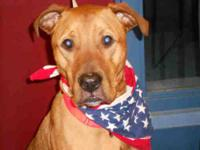 Pit Bull Terrier - Tyson - Large - Young - Male - Dog