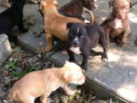 I have four males and four females available. Mom and