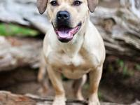 Pit Bull Terrier - Winnie Ct - Large - Young - Female -