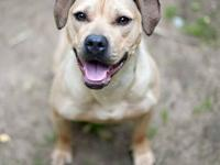 Pit Bull Terrier - Winnie Ny - Large - Young - Female -