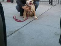 this is my beautiful 3 year old pit bull Tani, playful,