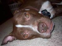 We are looking to re-home a male pitbull named Gaige.