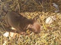 I have 3 pitbull puppies (2f)(1m). they are gorgeous!!