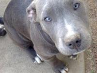 I am selling 3 male and 3 female pitbulls'. They are 3