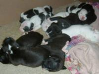 I have 9 puppies that will be ready to go to their