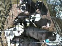 We have 7 puppies left 3 female 4 males mother is 80 lb
