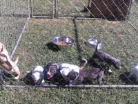 have two female puppies 10 weeks old and two male