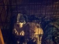 I have 2 female pitbull puppies for rehoming. They are