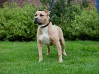 We are a premier kennel located outside of Birmingham,