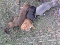 I have 5 pitbull puppies for rehoming. The father and