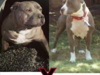 Sacramento Ebay Classifieds Dogs Puppies
