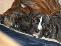 ***Update!! Only One Female in Litter - Call to
