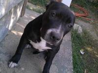 I have one female pitbull puppy her bloodline is