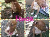 Rehoming my female pitbull puppy. Good with kids &