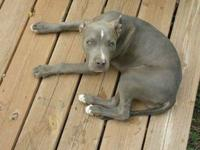 Hello, sadly we have to rehome our pitbull puppy. Shes