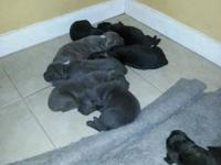 WE have 8 pup 3 males 5 females plz puppies are for