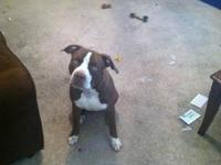 I'm selling my 7 month old red nose razor edge/gotti