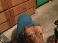 I am giving away my 3 year old pit bull terrier she is