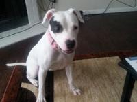 Pitbull for sale her name is diamond. Im selling her