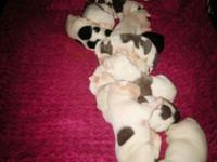 I have 9 full blooded pit bull puppies. 7 females and 2