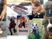 Hi, I Have Seven (7) Puppies for sale,Four (4) male's &