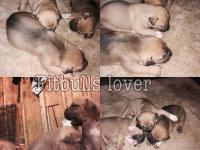 The puppies are four weeks old looking for a great