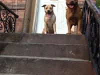 I have 6 pitbulls 2 boys 4 girls born jan 17 2014