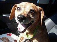 Pixel's story Pixel 8yr Male Beagle Mix, 20lbs Good