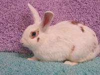 Pixie is a precious bun waiting for her forever home...