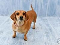 Pixie's story Meet Pixie! This sweet little gal loves