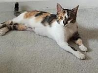 Pixie's story All HSWC animals are spayed/neutered,